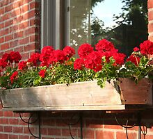 Geraniums in a Windowbox by Laurel Talabere