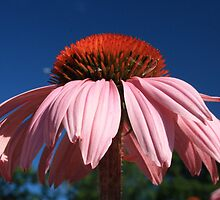 Sky Blue / Pink by Dave Godden
