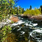 Lower Truckee River by FFRPhoto