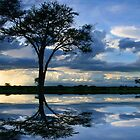 Reflections of Africa by John Dalkin