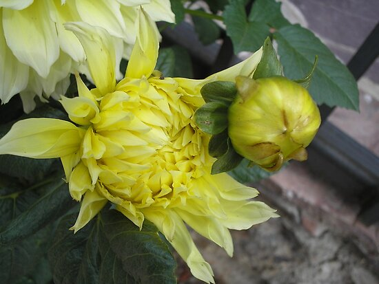Chrysanthemum with Bud by Ann Warrenton