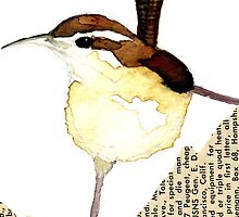 Carolina Wren by Carol Kroll