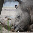 Rhino! by JenniferJW
