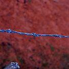 Barbed wire by 2HPhotography