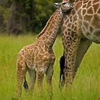Close to mom. by Dan MacKenzie
