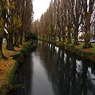 River Avon, Christchurch, New Zealand by Odille Esmonde-Morgan