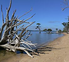Coochiemudlo Island by PhotosByG