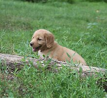 This Log Is Only A Minor Hurtle In My Lifes Journey- Penny 10 by goldnzrule