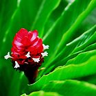 Tropical Flower Surrounded by Green by nadinecreates