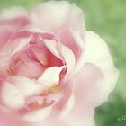 Rose collection 8 by aMOONy