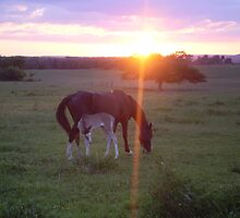 Bubbles and Stormie - Sunset on Walking Horse Acres Ranch by abc197492