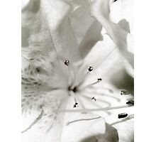Flower in Black and White 2 Photographic Print