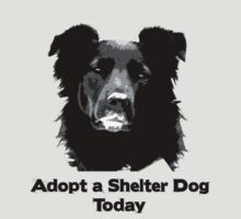 Adopt a Shelter Dog Today by Rachel Counts