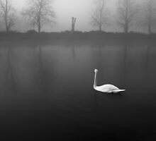 Swan  by Simona  Barbu