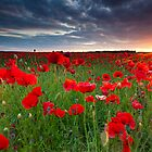 Sunset at the field by Carl Mickleburgh