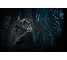 Night Visitor 3 - Psuedo Night Shot PS3 Photographic Print
