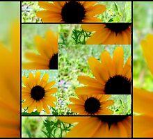 Black Eyed Susans Collage by debbiedoda