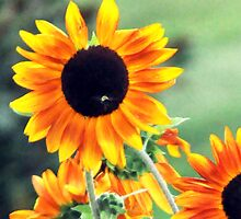 Sunflower & Guest by Roger Jewell