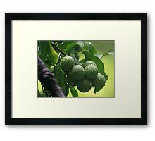 The Green Fruit Framed Print