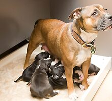 Bella and Pups by Pauline Tims