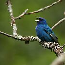 Singing the Blues by Bill McMullen