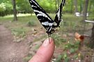 Zebra Swallowtail by NatureGreeting Cards ©ccwri