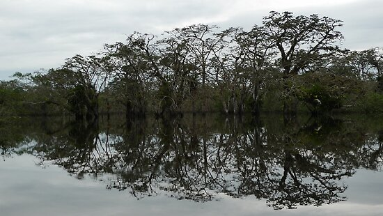 Reflecting on Cuyabeno - I by Peter Zentjens