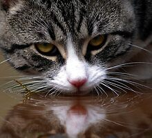 Water R… Cat! by Penny Kittel