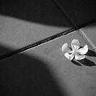 Floor by Laurent Hunziker