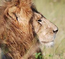 His Majesty by CriscoPhotos
