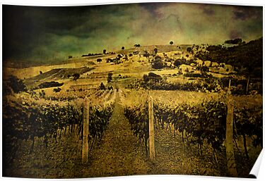 Zio's Vineyard by Angie Muccillo