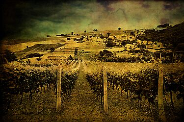 Zio&#x27;s Vineyard by Angie Muccillo