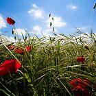 Provençal poppies by Revenant