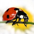 ladybird by Scott Thompson