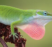 Lizard displaying his Red Bubble by Paulette1021