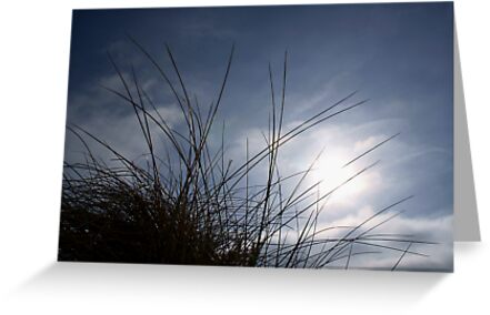 Grasses on the Beach at Croyde by Marcus Walters