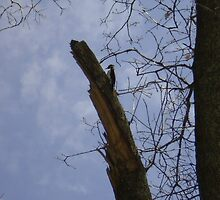 Woody the Wood Pecker by lilliepad