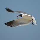 the flying gull by rue2