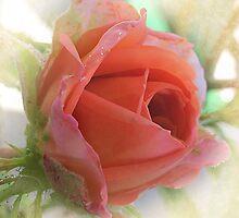 ~ Beauty in Miniature ~ by Brenda Boisvert