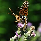 Butterfly by dlwagner