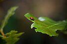 Lady Bug  by Vicki Pelham