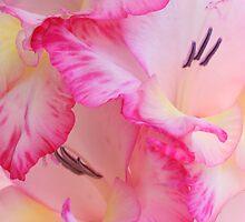 Pink Flower 7979 by João Castro