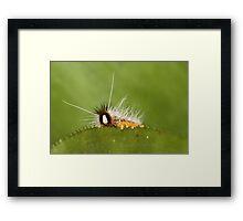 Species Framed Print