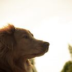 Golden Sunset Toller by Leanne Graham