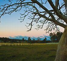 Jilliby, NSW central coast, Australia by Tim Freedman