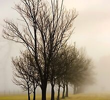 Maryvale Mist by Angie Muccillo