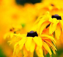 Yellow flowers of Latvija 2 by Rita Analise Kaulina