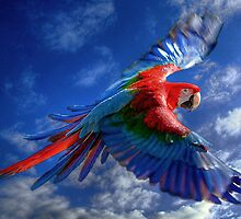 Macaw in Flight by Tarrby