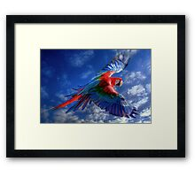 Macaw in Flight Framed Print