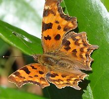 Comma Exclamation Mark by brianfuller75